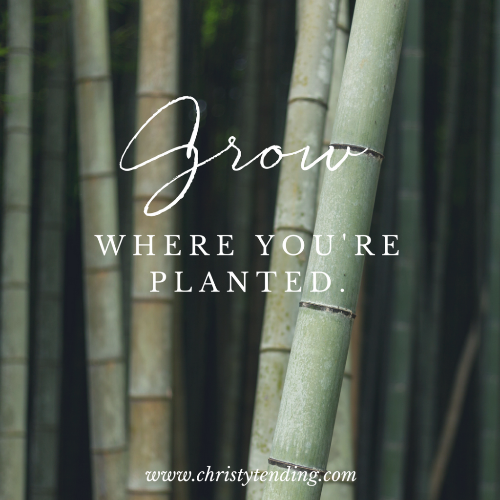 Grow where you're planted. >> www.christytending.com